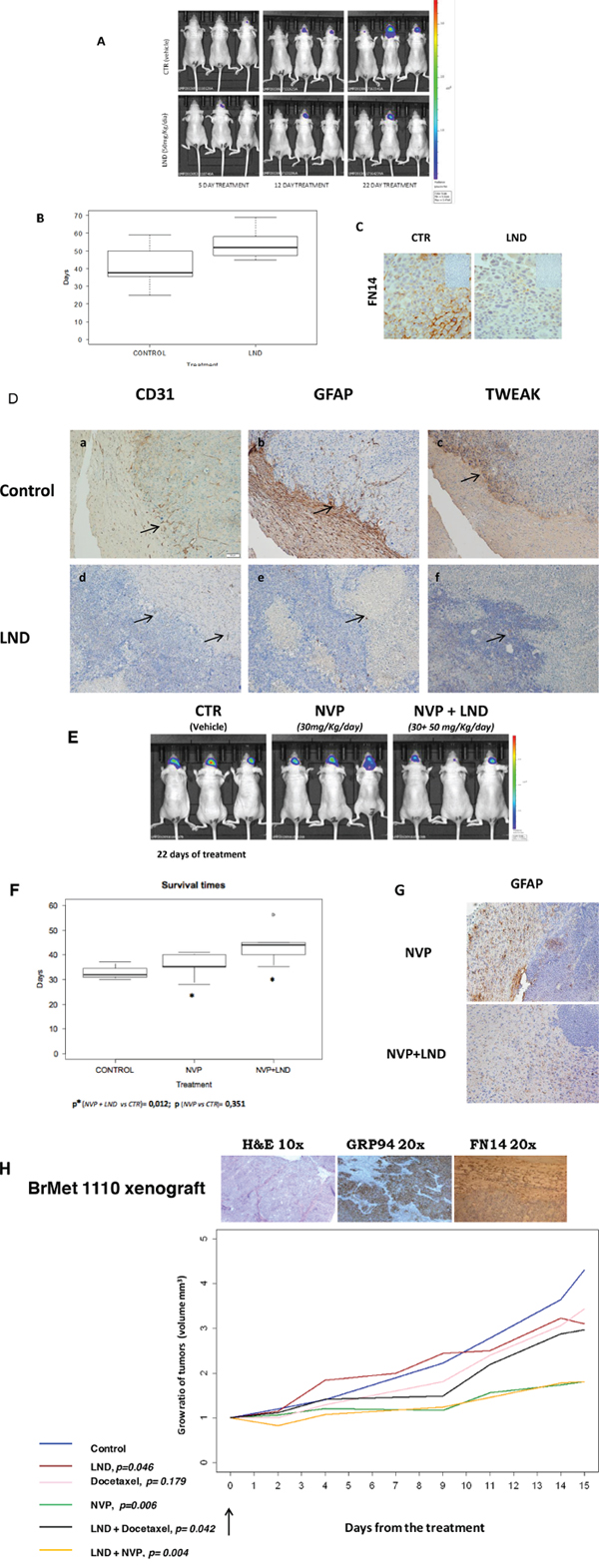 Experimental brain metastasis models to validate the therapeutic effect of a thalidomide derivative.