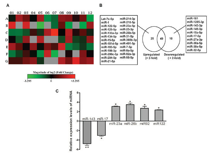 Oncotarget Estradiol Induces Apoptosis Via Activation Of Mirna 23a