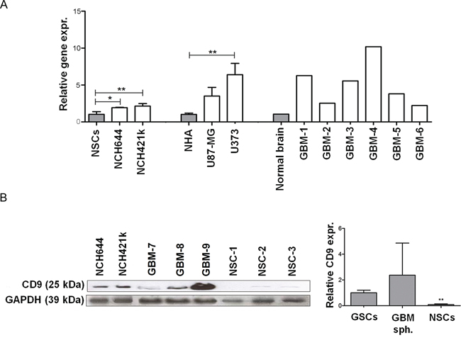 Expression of CD9 in GBM cells, GSCs cells and tissues.
