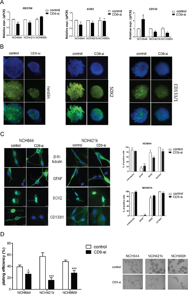 CD9 silencing effects on stem cell marker expression.