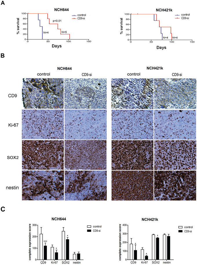 CD9 silencing prolongs survival of rats and alters protein expression of selected biomarkers in xenografts.