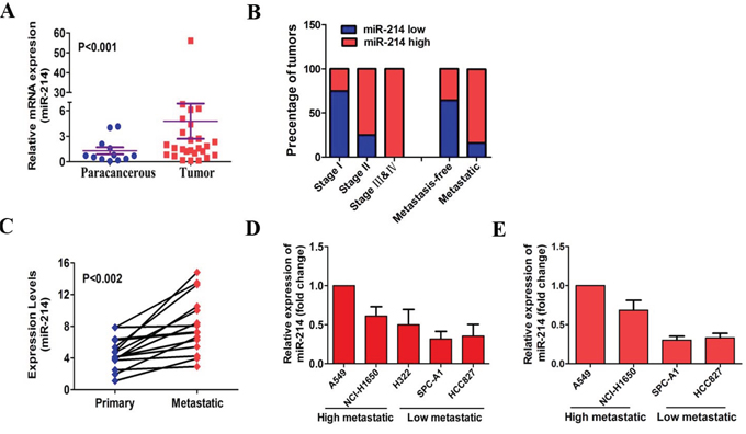 miR-214 is up-regulated in LAD and positively associated with metastasis.