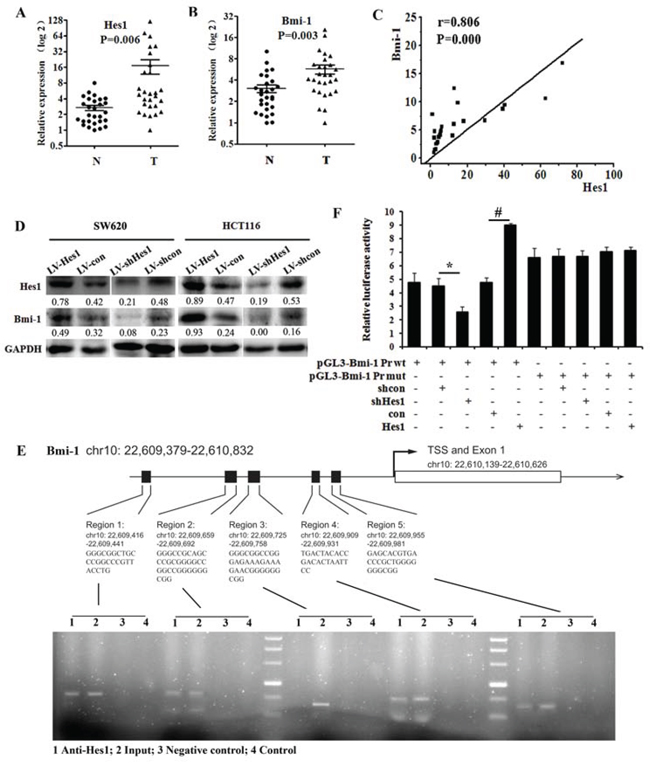 Hes1 expression is associated with Bmi-1 expression in colon cancer.