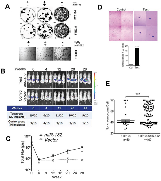 miR-182 enhances senescence bypass in FTSE cells under DNA stress and impaired p53.