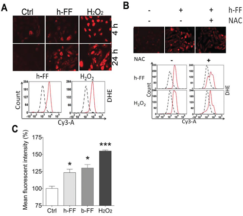 Follicular fluid for ROS induction in fallopian tube epithelial cells.