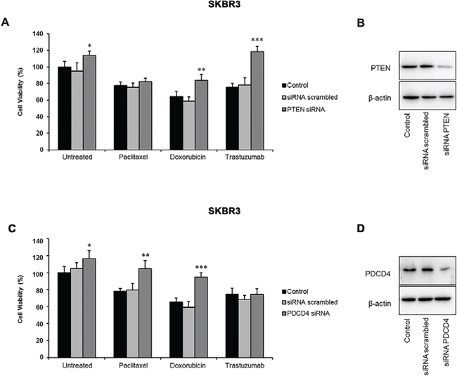 Effects of PTEN and PDCD4 silencing on the viability of HER2-positive breast cancer cells.