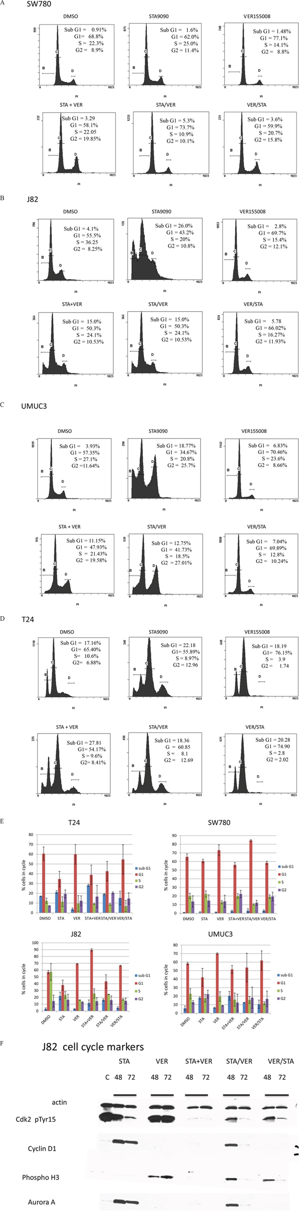 Flow cytometry and cell cycle analysis of bladder cells treated with HSP90 and/or HSP70 inhibitors.