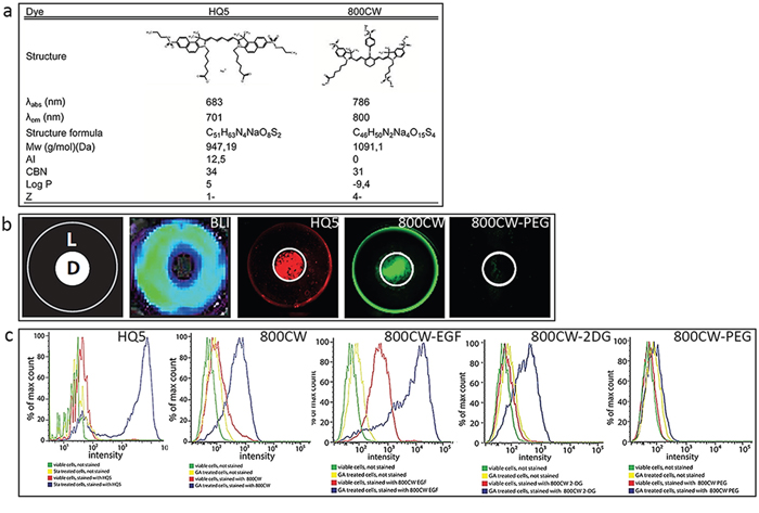 Physicochemical characteristics and in vitro examination of the necrotic avid properties of the near infrared fluorophores (NIRF) HQ5 and 800CW.