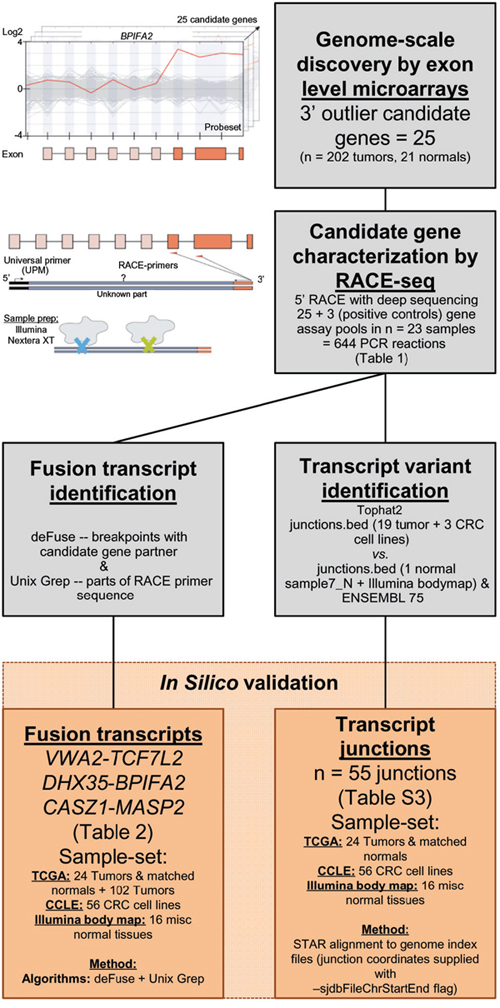 Pipeline to identify and characterize novel RNA variants in CRC.