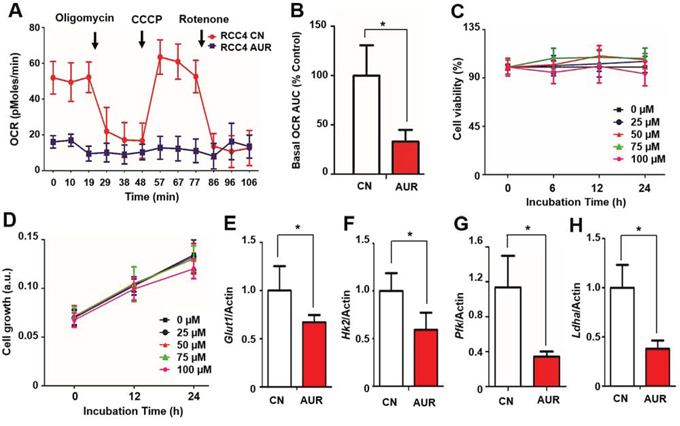 Auraptene significantly reduces the OCR of RCC cells and disrupts transcription of HIF-1α target genes without affecting cell viability.