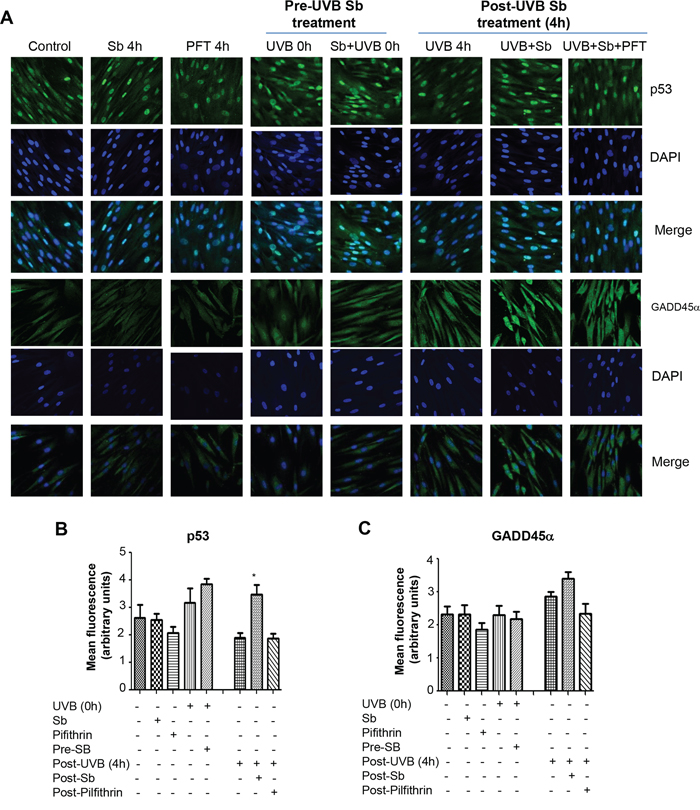 Effect of silibinin treatment on p53 and GADD45α following UVB exposure in NHDFs.