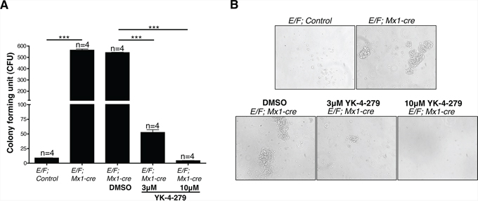 Spleen cells of mice with EWS-FLI1 induced leukemia display significantly increased clonogenic potential, which is inhibited by YK-4-279.