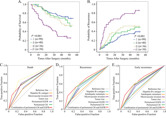 Prognostic and predictive value of combining peritumoral Cbl and EGFR.
