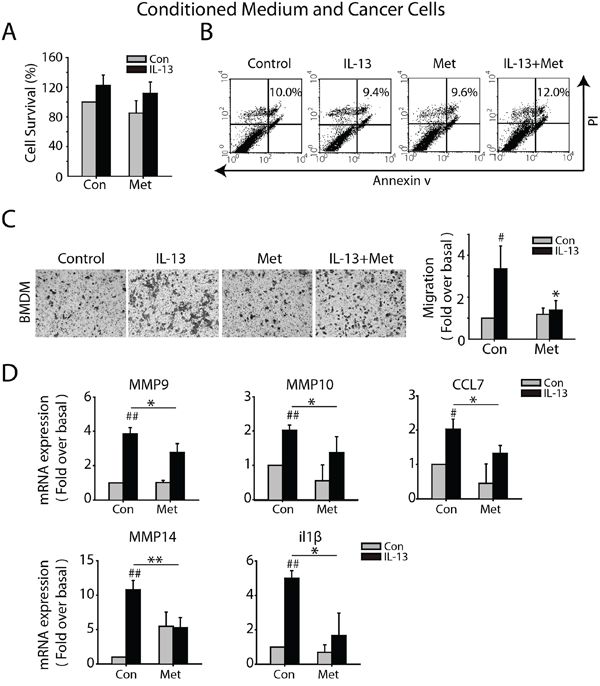 Metformin inhibits M2-like macrophages promoted migration of Lewis Cancer Cells (LLCs) in vitro.