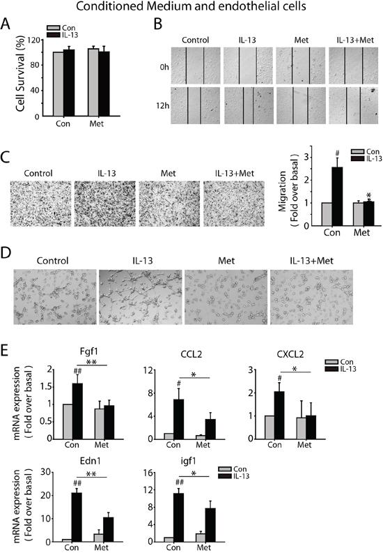 Metformin inhibits M2-like macrophages promoted angiogenesis in vitro.