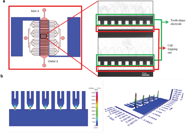Simulation of electric field generated using tooth shaped electrodes using CFDRC.