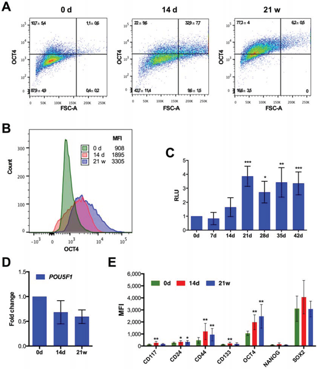 Expression of stemness markers after CPT treatment of SKOV3 cells.