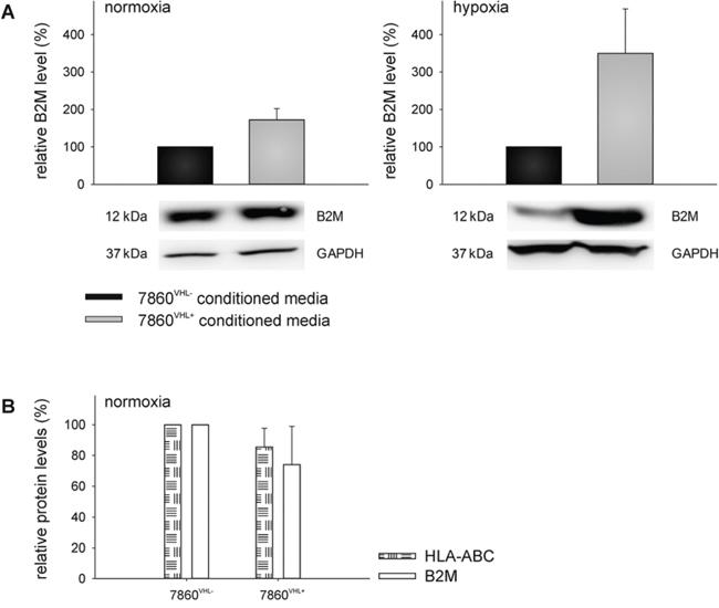 VHL-mediated up-regulation of B2M in the supernatant of 786-0VHL+ cells.