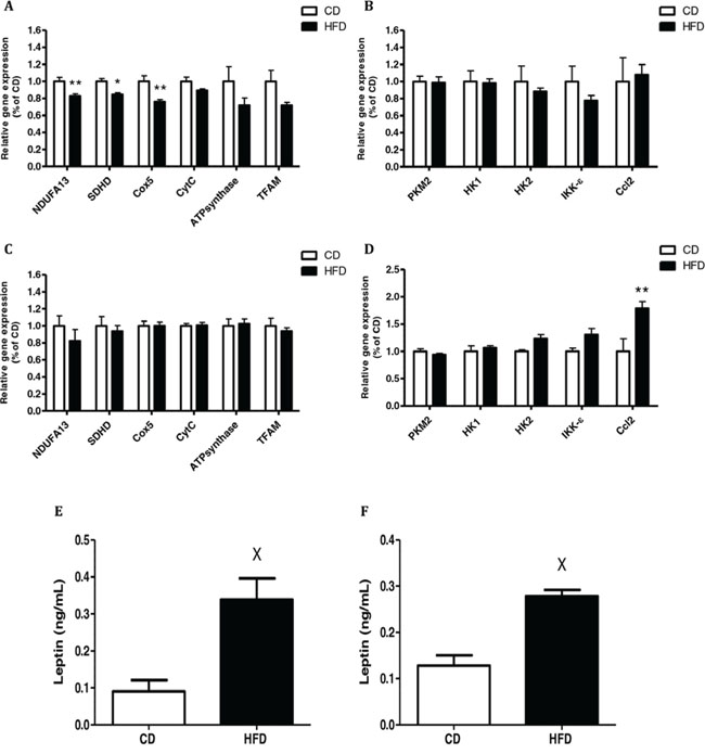 Conditioned media (CM) from high-fat diet (HFD)-fed mice decreased mitochondrial function and had a higher level of leptin.