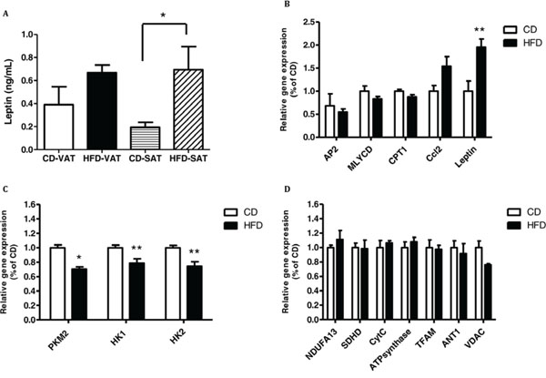 Co-culturing of MC38 cells with visceral adipose tissue (VAT) of high-fat diet (HFD)-fed mice increases the expression of leptin and decreases the expression of the glycolytic genes.