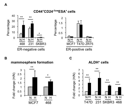Hypoxia increases the percentage of CSCs in different breast cancer cell lines.