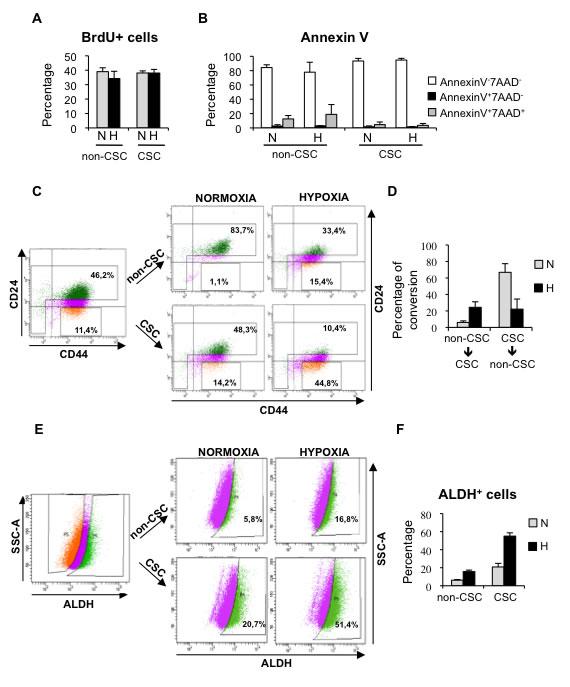 Hypoxia promotes dedifferentiation of breast cancer cells.
