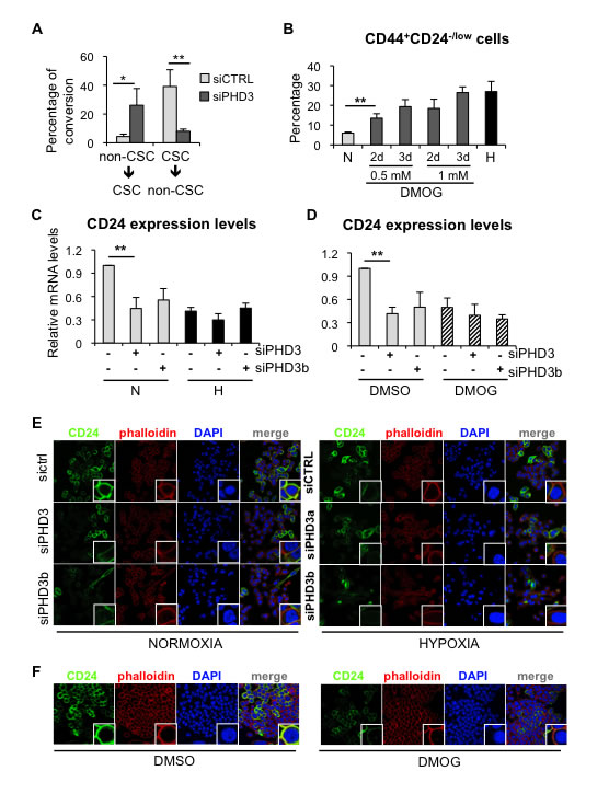 PHD3 silencing promotes dedifferentiation in breast cancer cells through a hydroxylase-dependent mechanism.