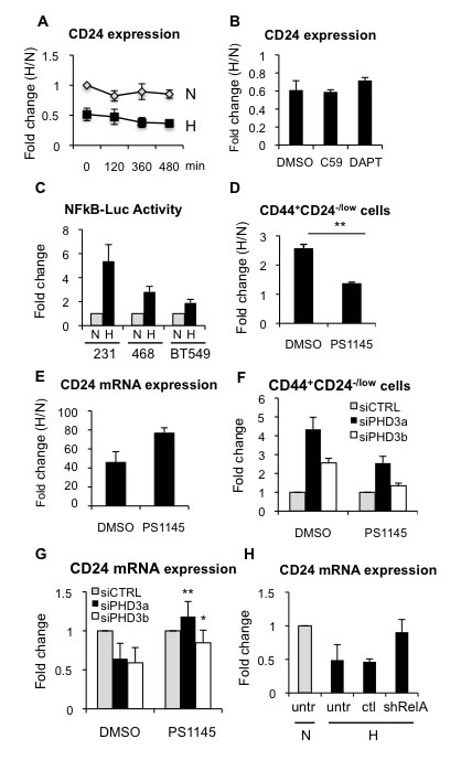 Hypoxia-dependent CD24 downregulation is mediated through NFκB.