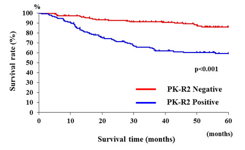 Relationship between PK-R2 expression and survival rates in all human colorectal cancer patients.