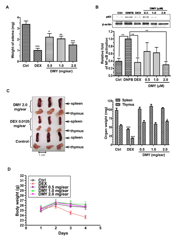 Anti-inflammatory effects of DMY in DNFB-induced DTH mice.