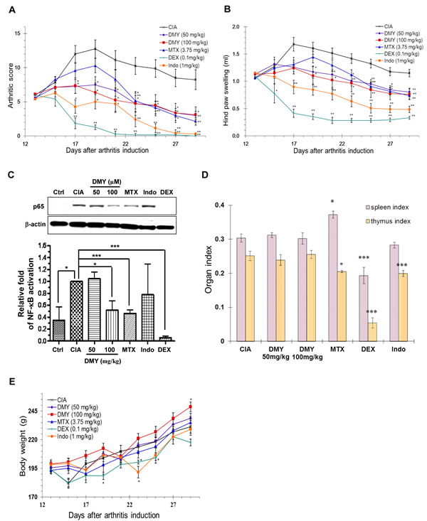 Anti-arthritic effect of DMY in collagen-II induced arthritis (CIA) rats.