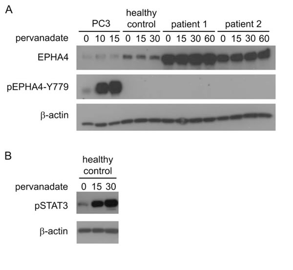 Activation of EPHA4 in CD4+ T-cells