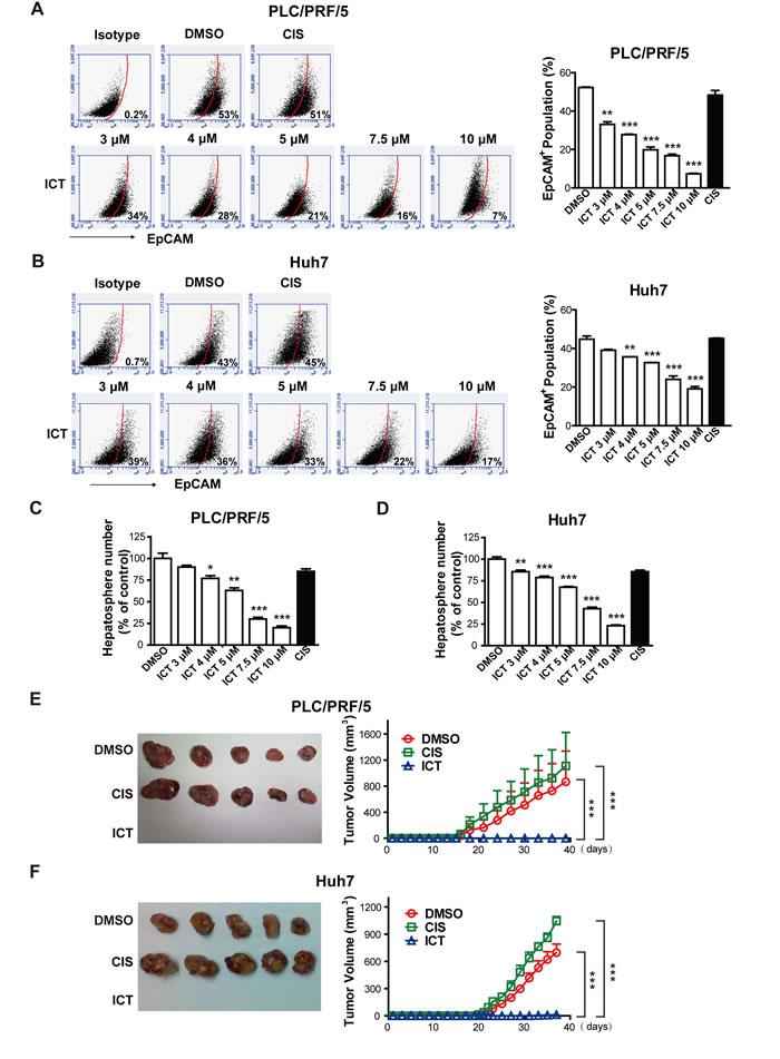 Icaritin suppresses HCICs.