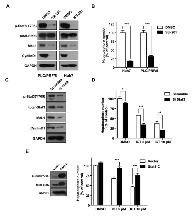 Stat3 is critical for HCC initiation and is involved in Icaritin-reduced hepatosphere formation.