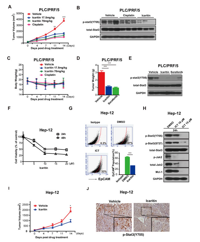 Icaritin inhibits tumor formation in xenografts of PLC/PRF/5 cells and primary HCC cells.