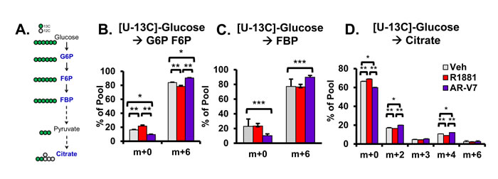 Analysis of AR isoform-specific progression through glycolysis with [U-13</a>C]-glucose metabolic flux analysis.