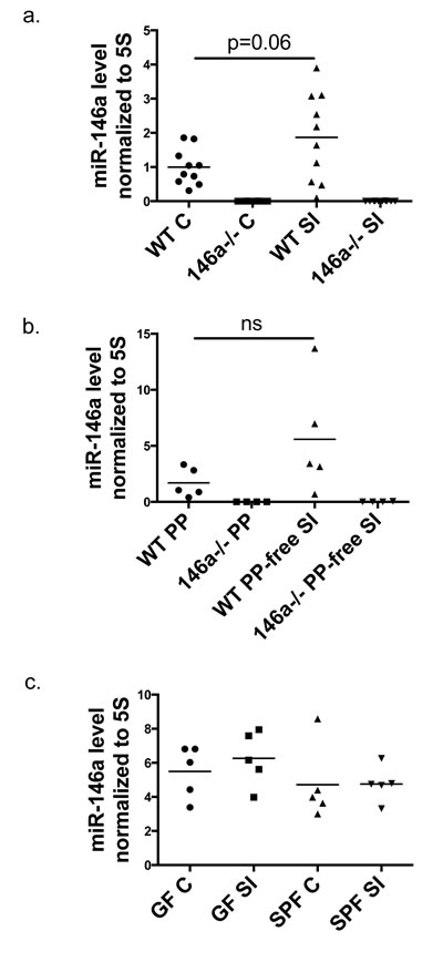 miR-146a is expressed within the intestinal tract.
