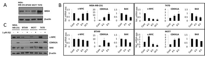 JQ1 treatment attenuates c-Myc expression resulting in increased expression of CDKN1A and decreased expression of BAX, at both the mRNA and protein levels.