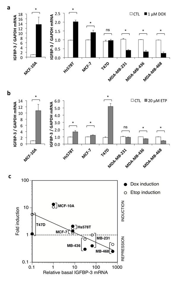 IGFBP-3 regulation by DNA-damaging drugs in breast cells.