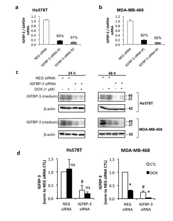 The effect of IGFBP-3 silencing on the response to doxorubicin in Hs578T and MDA-MB-468 cells.