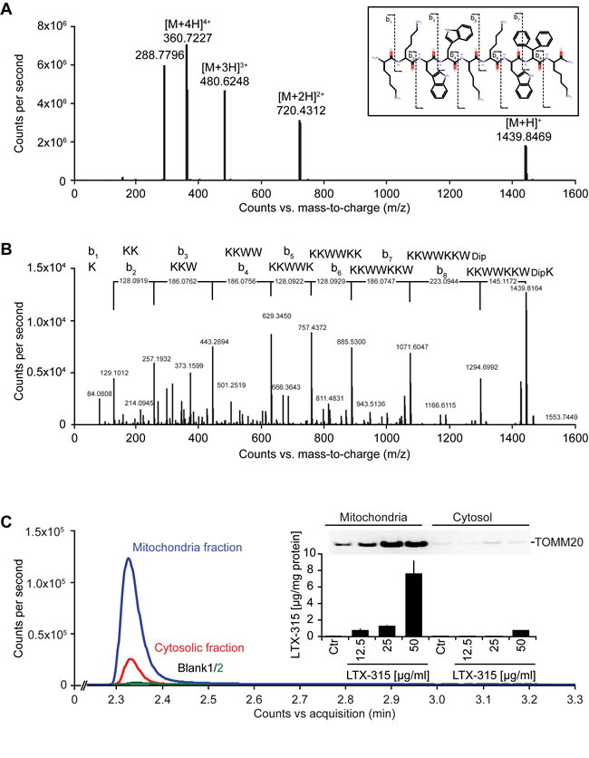 Mass spectrometric detection of LTX-315 enriched in the mitochondrial fraction.