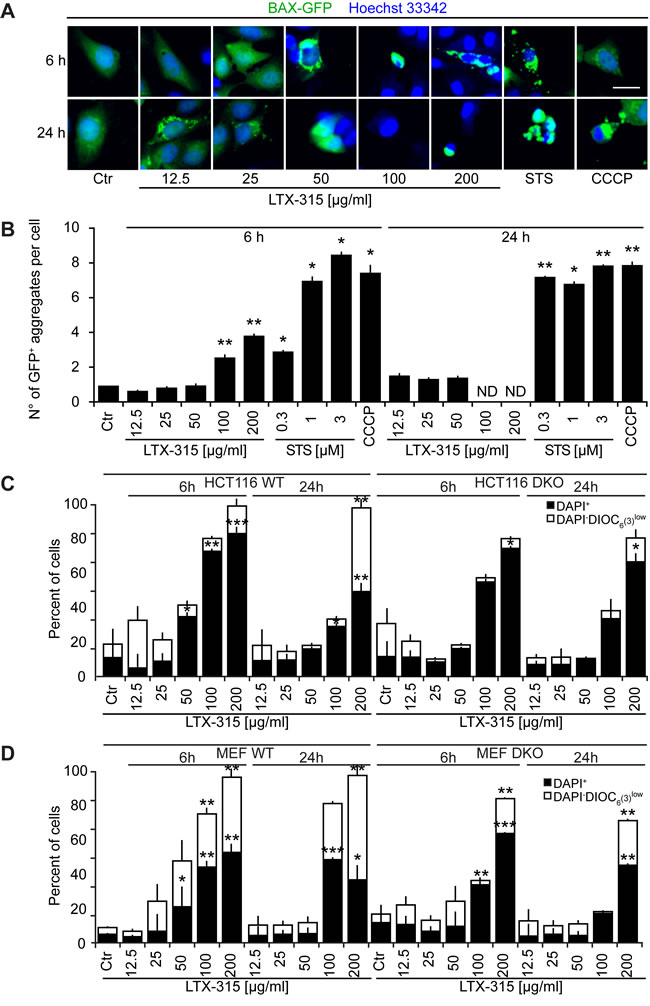 Role of Bcl-2 family protein in cell death induction by LTX-315.