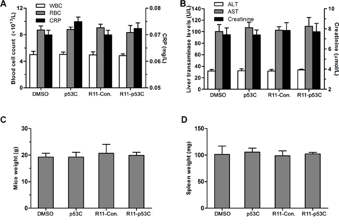 In vivo toxicity of R11-p53C peptide.