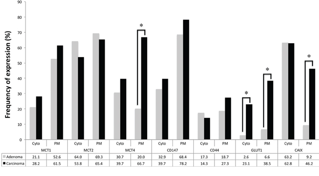 Frequency of staining of the different proteins analyzed in adrenocortical adenomas and carcinomas.