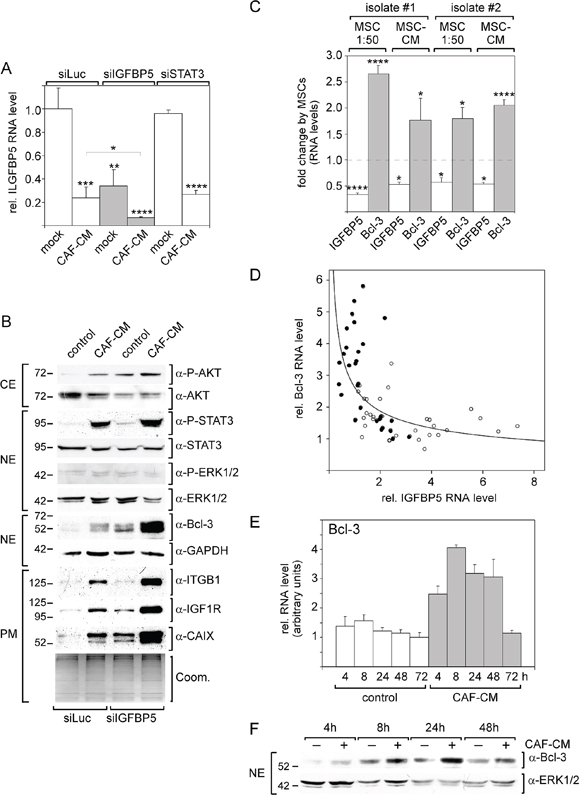 Knock-down of IGFBP5 mimics most of the CAF-CM-induced effects on signaling pathways and protein expression.