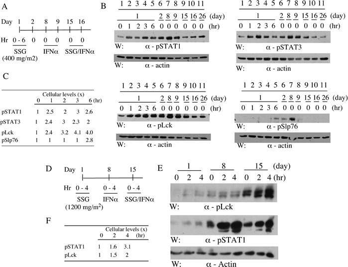 SSG modulates peripheral blood cell phospho-proteins in patients.