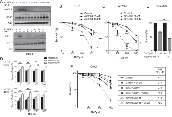 IGF-1R inhibition induces MGMT-independent sensitization of BRAF WT and mutant melanoma cells to TMZ.