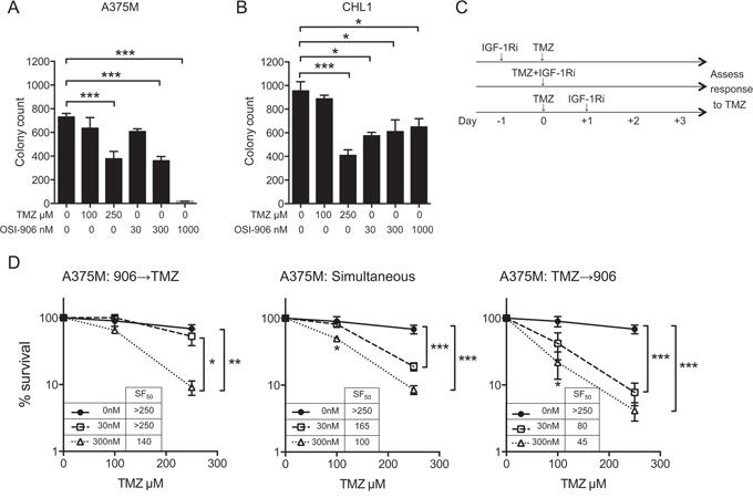 IGF-1R inhibition induces schedule-dependent sensitization to TMZ.
