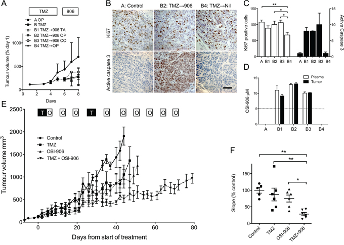 IGF-1R inhibition sensitizes melanoma to TMZ in vivo.