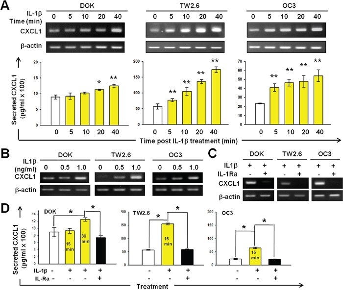 IL-1β-induced CXCL1 production in DOK and OSCC cell lines.